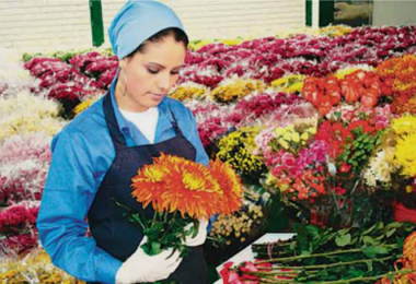 florist-horticultor-1